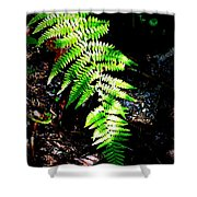 Light Play On Fern Shower Curtain