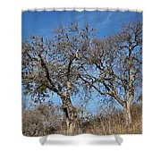 Light Posts And Trees Shower Curtain