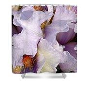 Light Purple Irises 2 Shower Curtain