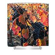 Light Through Fall Vineyard Shower Curtain