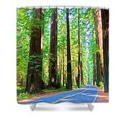 Light Through The Redwoods Shower Curtain
