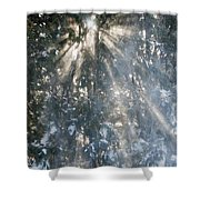 Light Throught The Trees Shower Curtain