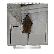 Lighthouse Bat Shower Curtain