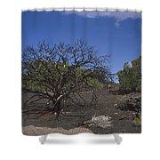 Lightning Struck Tree Shower Curtain