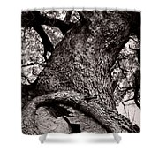 Lightning Tree  Shower Curtain by Trish Mistric
