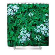 Like Queen Annes Lace Shower Curtain