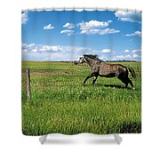 Like The Wind 2 Shower Curtain