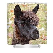Likes Vegetarians Shower Curtain