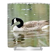 Lila Goose Queen Of The Pond 2 Shower Curtain