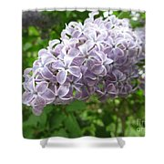 Lilac 1 Shower Curtain