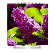 Lilac Bloom Shower Curtain