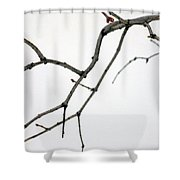Lilac Branches Shower Curtain