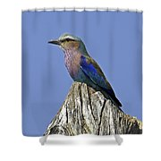 Lilac Breasted Roller Shower Curtain