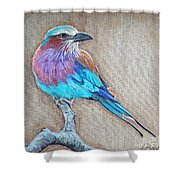 Lilac-breasted Roller Shower Curtain