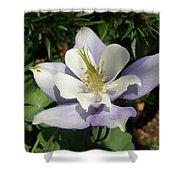 Lilac Columbine Shower Curtain