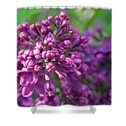 Lilac Dizzy Shower Curtain
