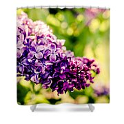 Lilac Festival Shower Curtain