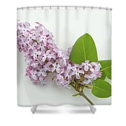 Lilac Flowers - White Background Shower Curtain