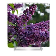 Lilac  Shower Curtain