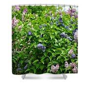 Lilac Heaven Shower Curtain