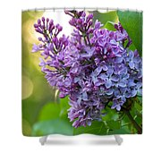 Lilac Heaven Shower Curtain