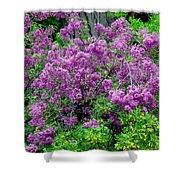 Lilac Laneway  Shower Curtain