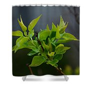 Lilac Leaves Shower Curtain