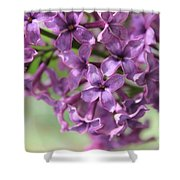Lilac Meditation Aroma Shower Curtain