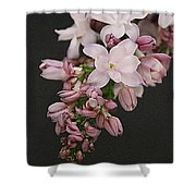 Lilac On Black Shower Curtain