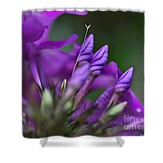 Lilac Petals And Purple Buds Shower Curtain