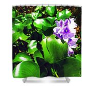 Lilac Pink Beauty Shower Curtain