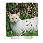 Lilac Point Siamese Cat Shower Curtain