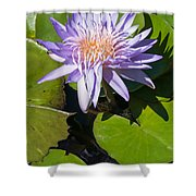 Lilac Water Lily Shower Curtain