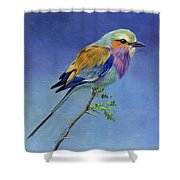 Lilacbreasted Roller Shower Curtain