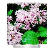 Lilacs After The Rain Shower Curtain
