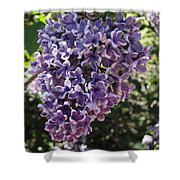 Lilac Beauty Shower Curtain
