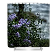 Lilacs By The River Shower Curtain