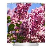Lilacs Shower Curtain by Elena Elisseeva
