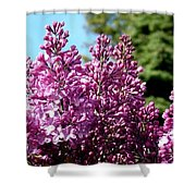 Lilacs- Horizontal Format Shower Curtain
