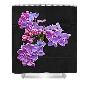Lilacs - Perfumed Dreams Shower Curtain
