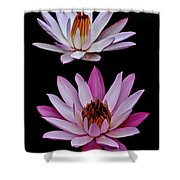 Lilies In Black Shower Curtain