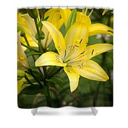 Lilies In The Sun Shower Curtain