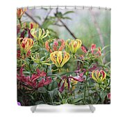 Lilies Of Color Shower Curtain