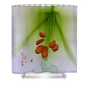 Lilium Formosa Shower Curtain