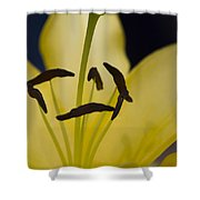 Lilium In Yellow Shower Curtain