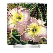 Lillies Clothed In Glory Shower Curtain