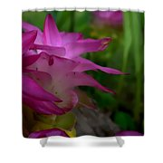 Lilly Around The Tree Shower Curtain