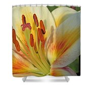 Lilly White 2 Shower Curtain