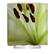 Lily 2am-114584 Shower Curtain