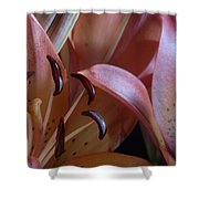 Lily 5 Shower Curtain
